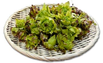 山菜の魅力