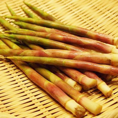 【予約】天然山菜 根曲がり竹 500g(採取者・古沢)